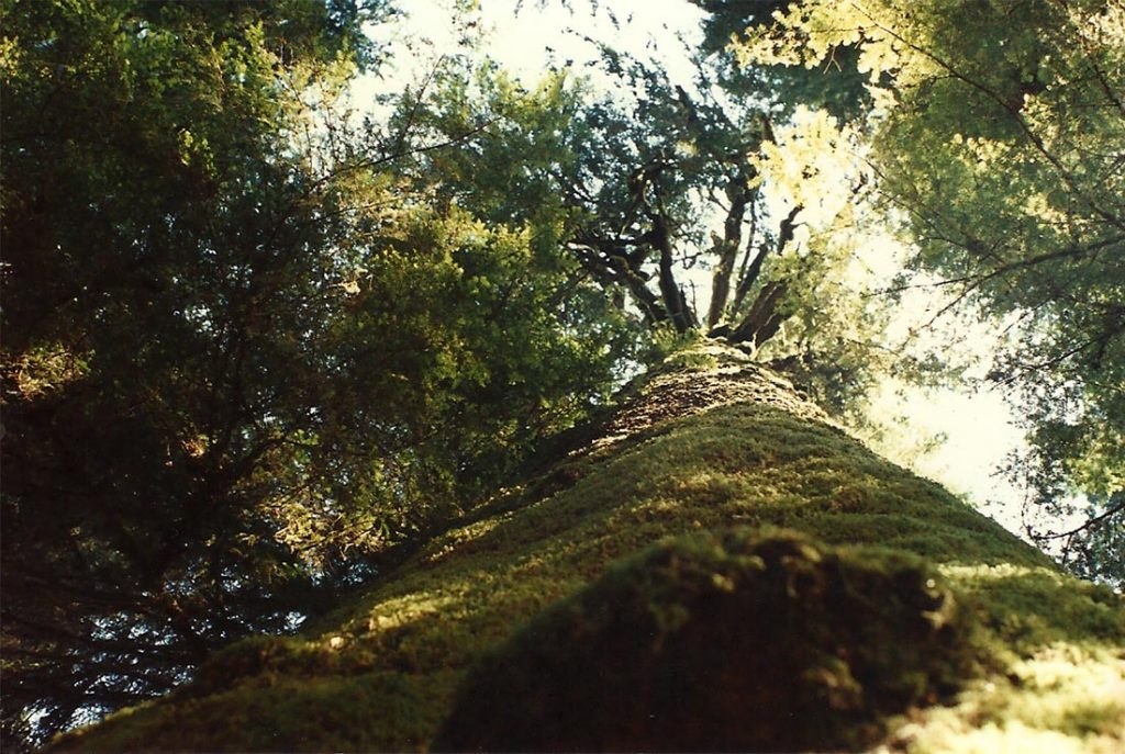 Westerkamp, Carmanah_giant tree_July 1991 lq